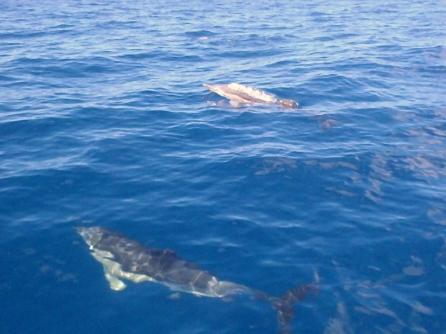 e9f9e-dolphin81kresized